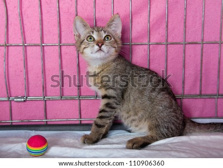 Beautiful wild kitten at a local animal shelter waiting to be adopted into a loving home. - stock photo