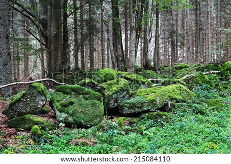 Beautiful Wilderness from the summer  Mountains in southern Czech - stock photo