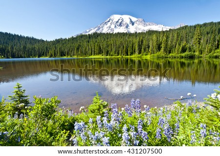 Beautiful wildflower at Reflection Lake, Mt Rainier National Park  - stock photo