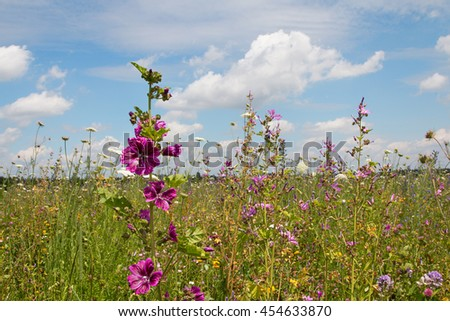 beautiful wildflower meadow with high mallows - pink malva sylvestris. Blue sky with clouds. - stock photo