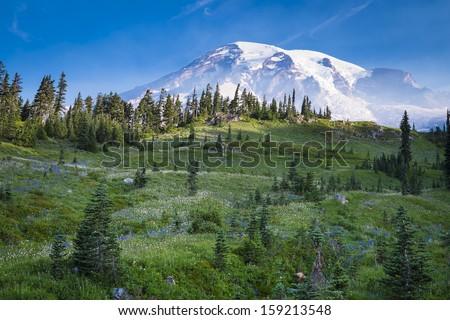 Beautiful wildflowers and Mount Rainier, Washington state - stock photo