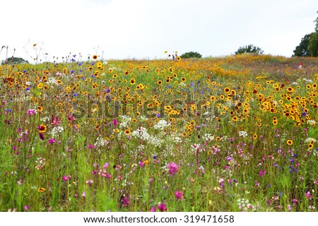 beautiful wildflowers in a field in united kingdom - stock photo