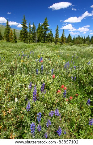 Beautiful wildflowers in a wetland area of the Bighorn National Forest - stock photo