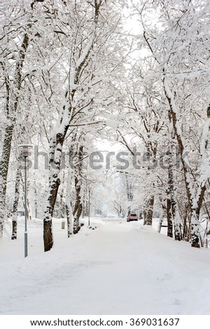 Beautiful winter alley-corridor of woods under the snow in Sigulda, Latvia. Bright outdoors vertical image.