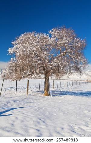Beautiful winter day with fresh fallen snow on the country rural plains of the foothills to the Colorado Rocky Mountains. Portrait scenic view of a fresh dusted with snow tree and blue sky above.   - stock photo