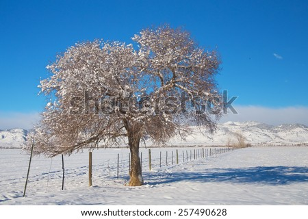 Beautiful winter day with fresh fallen snow on the country rural plains of the foothills to the Colorado Rocky Mountains. Scenic view of a fresh dusted with snow tree and blue sky above.   - stock photo