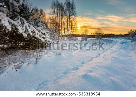 Beautiful winter field and trees landscape. Snow covered polish landscape.