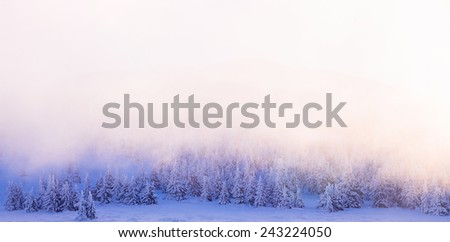 Beautiful winter forest border, sun light over trees background, fog over firs covered with snow, wintertime greeting card with copy space, beauty of mountainous nature - stock photo