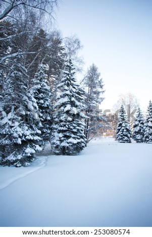 Beautiful winter forest photo for you