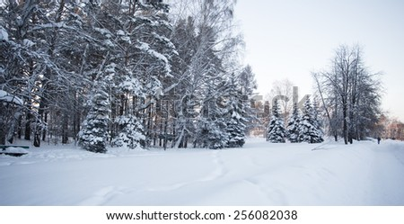 Beautiful winter forest photo for you - stock photo