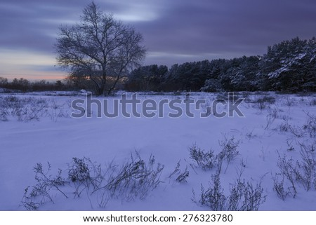 beautiful winter forest sheltered snow at sunset - stock photo