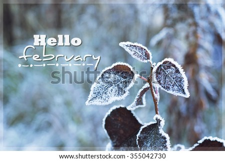 Beautiful winter image - close up of frozen tree branch and  leaves covered with rime. Hello february concept - photo with tilt-shift effect. selective focus - stock photo
