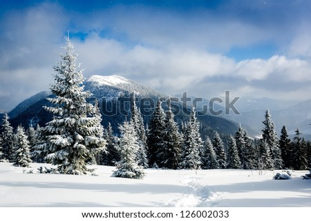 Beautiful winter in the mountains