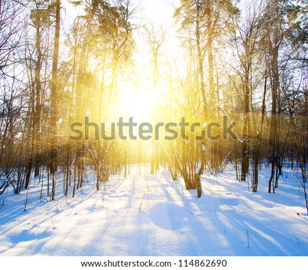 Beautiful winter landscape at sunset (sunrise) with trees in snow and sun shine through branches