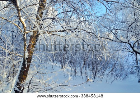 Beautiful winter landscape - frosty trees in cold sunny weather - stock photo