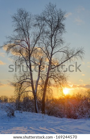 Beautiful winter landscape in snowy forest with sunset - stock photo