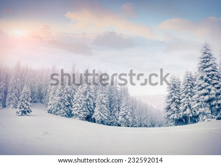 Beautiful winter landscape in the foggy mountains. Retro style. - stock photo