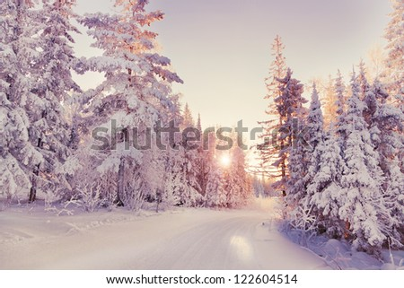 Beautiful winter landscape in the forest. Sunset - stock photo