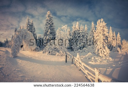 Beautiful winter landscape in the mountain forest. Retro style. - stock photo