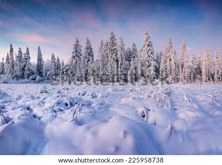 Beautiful winter landscape in the mountain forest. Sunrise - stock photo