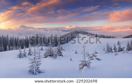 Beautiful winter landscape. Mountain panorama at sunrise. Christmas view. Carpathians, Ukraine, Europe - stock photo