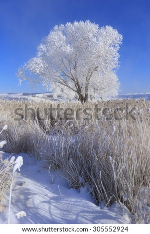 beautiful winter landscape trees in hoarfrost in the snow-covered field on a sunny day - stock photo