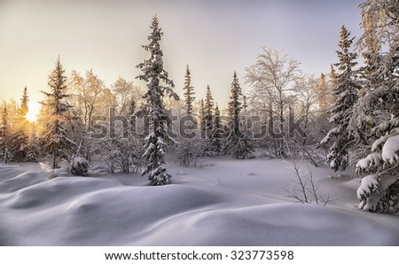 beautiful winter landscape. winter forest - stock photo
