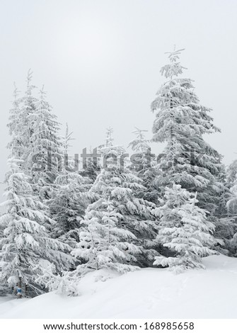 Beautiful winter landscape with fog in the Carpathian mountains, Ukraine, Europe