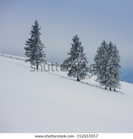 Beautiful winter landscape with snow covered fir trees and fog in a frosty and sunny day in Carpathians, Ukraine