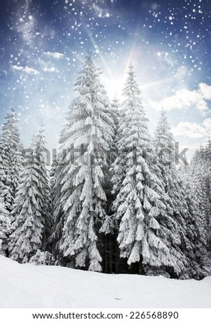 Beautiful winter landscape with snow covered trees and blue sky - stock photo