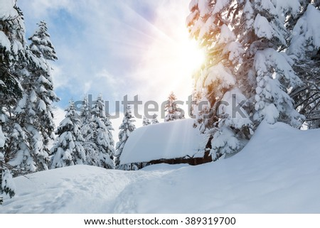 Beautiful winter landscape with snow covered trees and small hut in snowfall day.