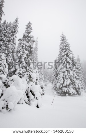 Beautiful winter landscape with snow covered trees in fog - stock photo