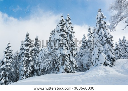 Beautiful winter landscape with snow covered trees, wonderful winter in snowfall day. - stock photo