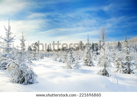 beautiful winter landscape with the forest  and blue sky - stock photo