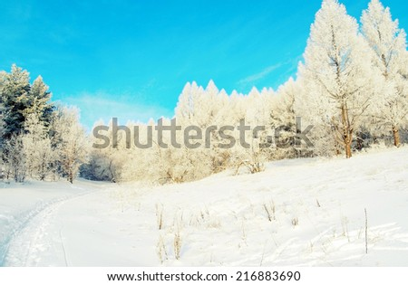 Beautiful winter landscape with trees hoarfrost covered, tinted photo - stock photo