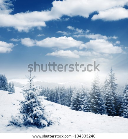 Beautiful winter panorama with snow covered trees - stock photo