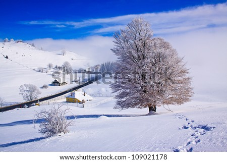 Beautiful winter rural landscape with snow covered trees and fog - stock photo