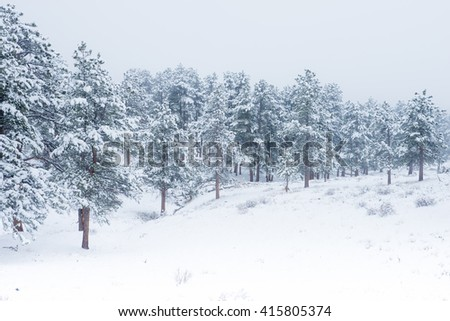Beautiful winter scene landscape background with snow falling on forests of green mountain pine trees - stock photo