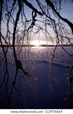 Beautiful winter sunset through frozen birch branches