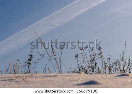 Beautiful winter views of dry grass in the snow against the blue sky - stock photo