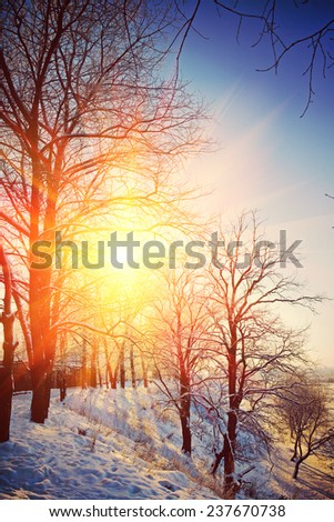 Beautiful wintry view on hill with leafless trees on sunrise instagram stile