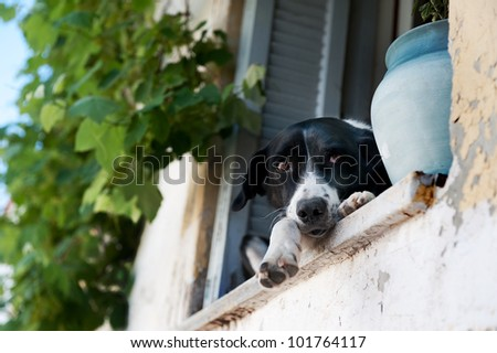 beautiful  with sweet beautiful expression dog sitting on the sill of a window b