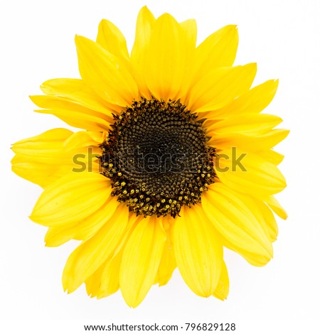Beautiful with yellow sunflower on white background. Floral pattern. Flat lay, top view. Frame of flowers. Flowers texture