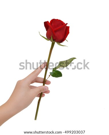 Beautiful woman hand holding a red rosebud on a white isolated background