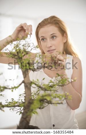 beautiful woman taking care of a bonsai - stock photo