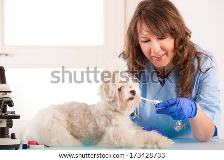 Beautiful woman vet with toothpaste trying to clean tooth of maltese dog in the treatment room