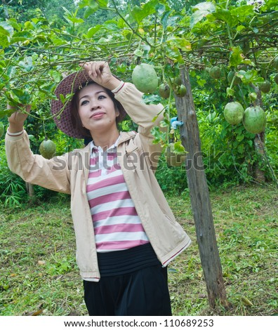 Beautiful woman with pink hat working in the passion fruit garden.
