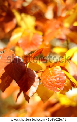 Beautiful yellow and orange autumn leaves and sunshine