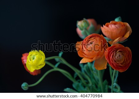 Beautiful yellow and red roses on a black background - stock photo