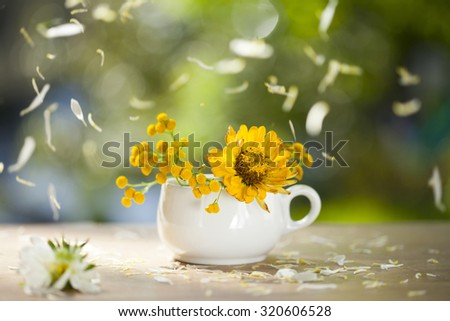 Beautiful yellow aster flowers and falling petals - stock photo